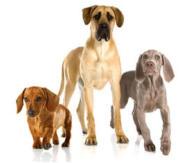 gehoorzaamheidstraining hond
